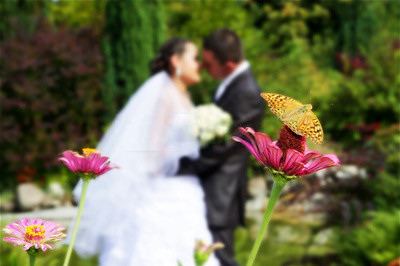 Butterfly Themed Wedding Ideas