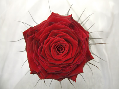how to make a single rose bouquet